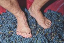 Priorat Wine